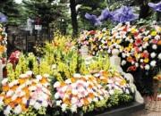 清明假期香爐峰、望秦山墓區推出免費鮮花