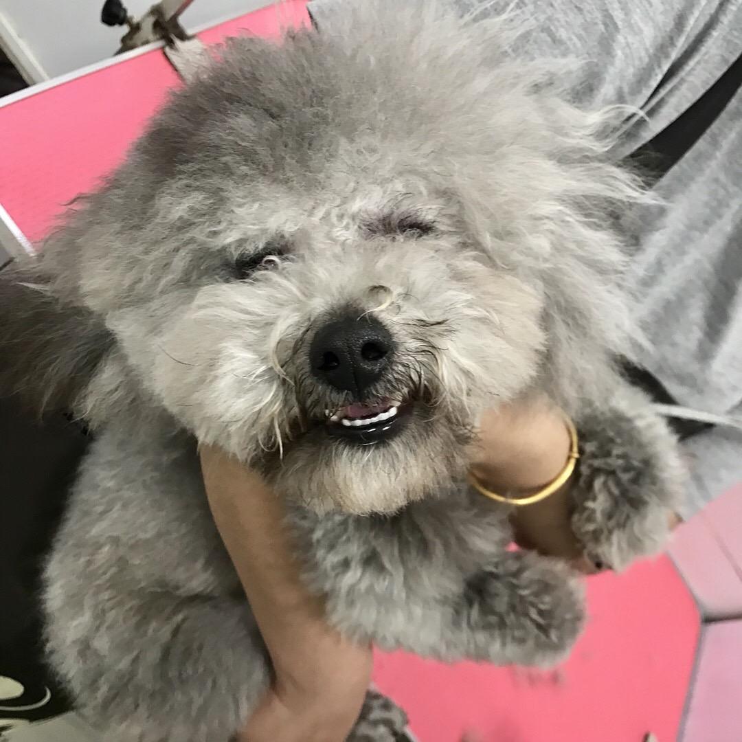我的狗狗丢了,好心的你如上果捡到了请还给我