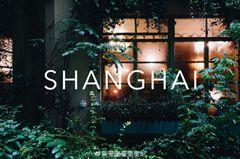 上海 | 漫游最美林荫道