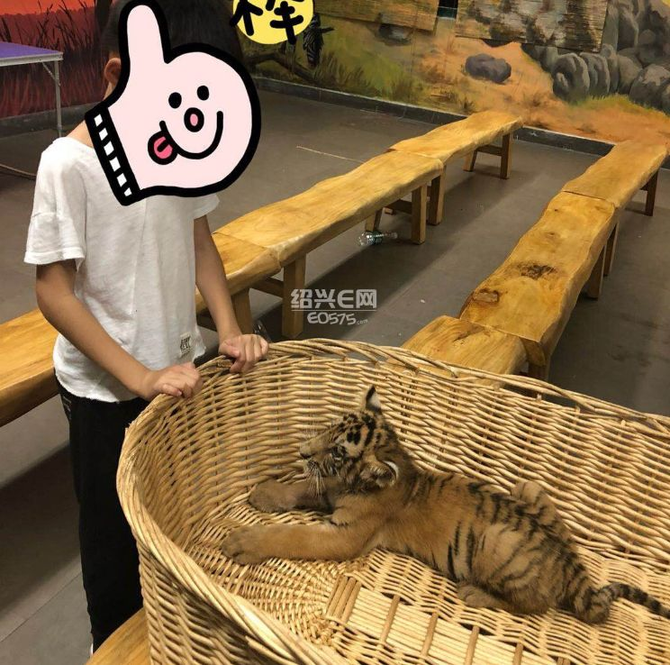 上海野生动物园一日游!阵雨绵绵也挡不住我们的热情~