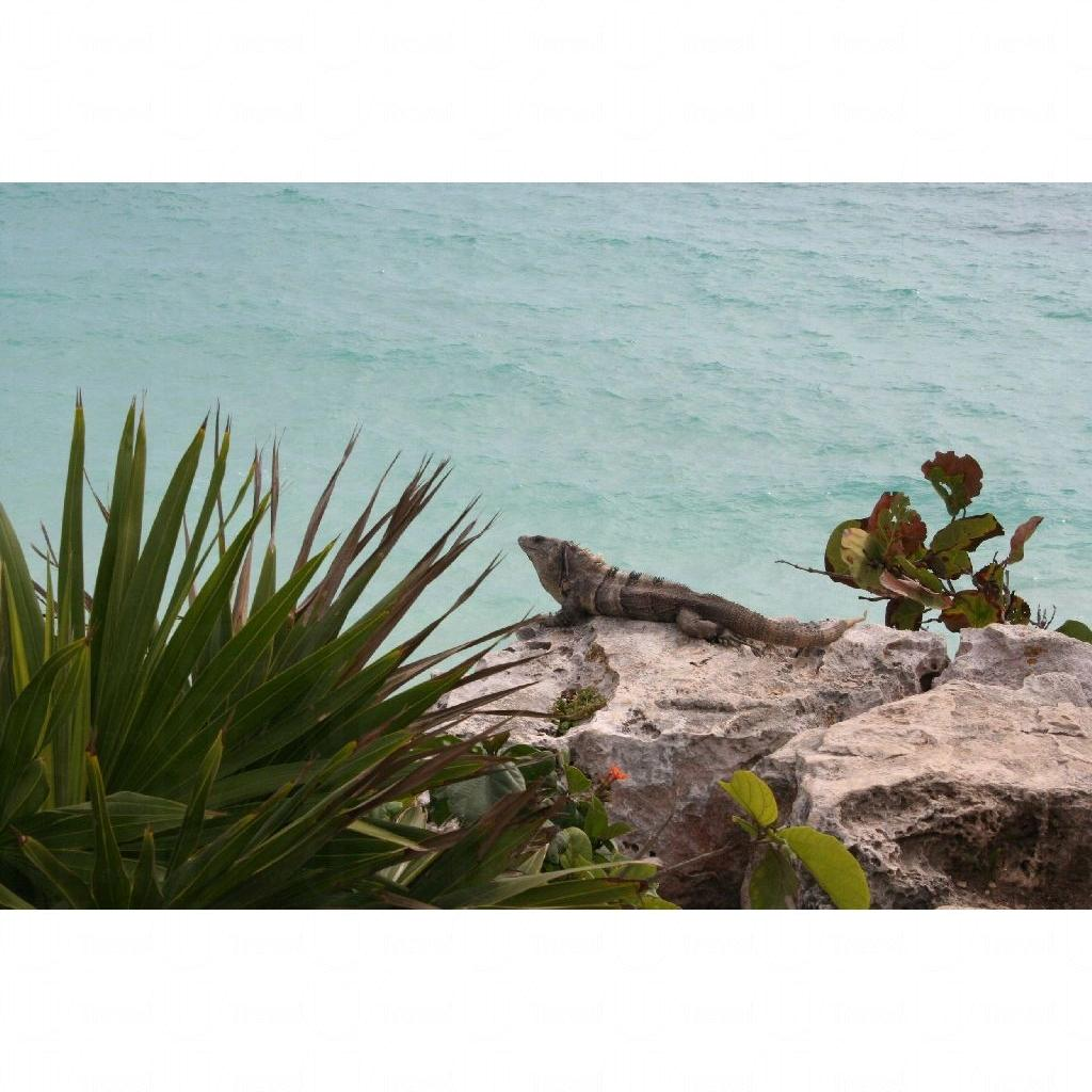 尤卡坦半岛