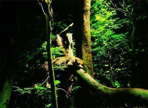 """新加坡夜间野生动物园"""""""""""