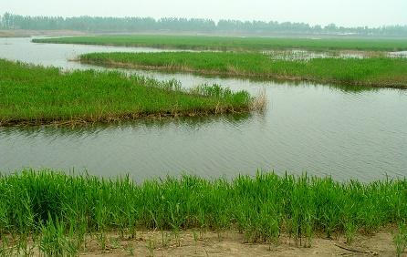 汉石桥湿地