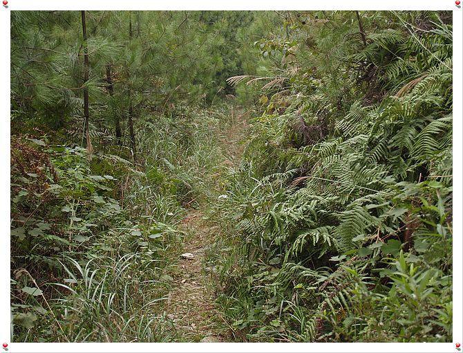 大垭口森林公园