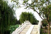"""涟水县五岛风景区"""""""""""