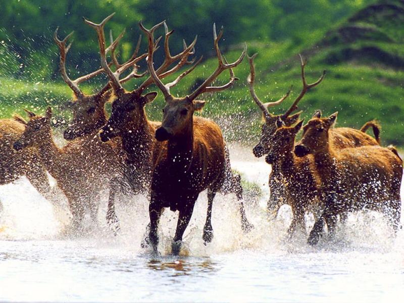 盐城大丰麋鹿国家级自然保护区