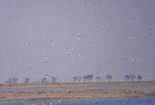 团泊自然保护区