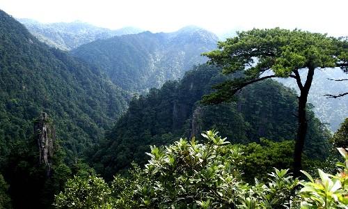 莽山森林公园