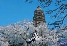【春游特惠季】苏州虎丘、甪直古镇、灵山大佛、拈花湾、三国水浒