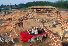 7-8月杭州野生动物园百兽狂欢亲子一日游