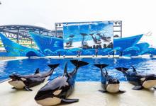8.24/25/29【上海海昌海洋公园一日游】