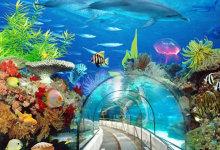 上海迪士尼乐园一次入园+长风海底世界三日套餐