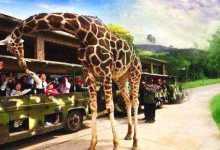 杭州野生动物园亲子:与大自然动物来个亲密接触(300元/对)