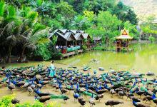 云南西双版纳、普洱热带雨林风光纯玩双飞五日游