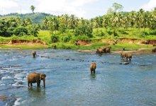 【版纳风情】云南西双版纳野象谷、热带植物园、原始森林公园双飞