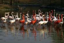 杭州野生动物园百兽狂欢、冰雪动物城亲子特价一日游