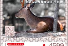 11-12月双古都双温泉 6日半自助(阪静)