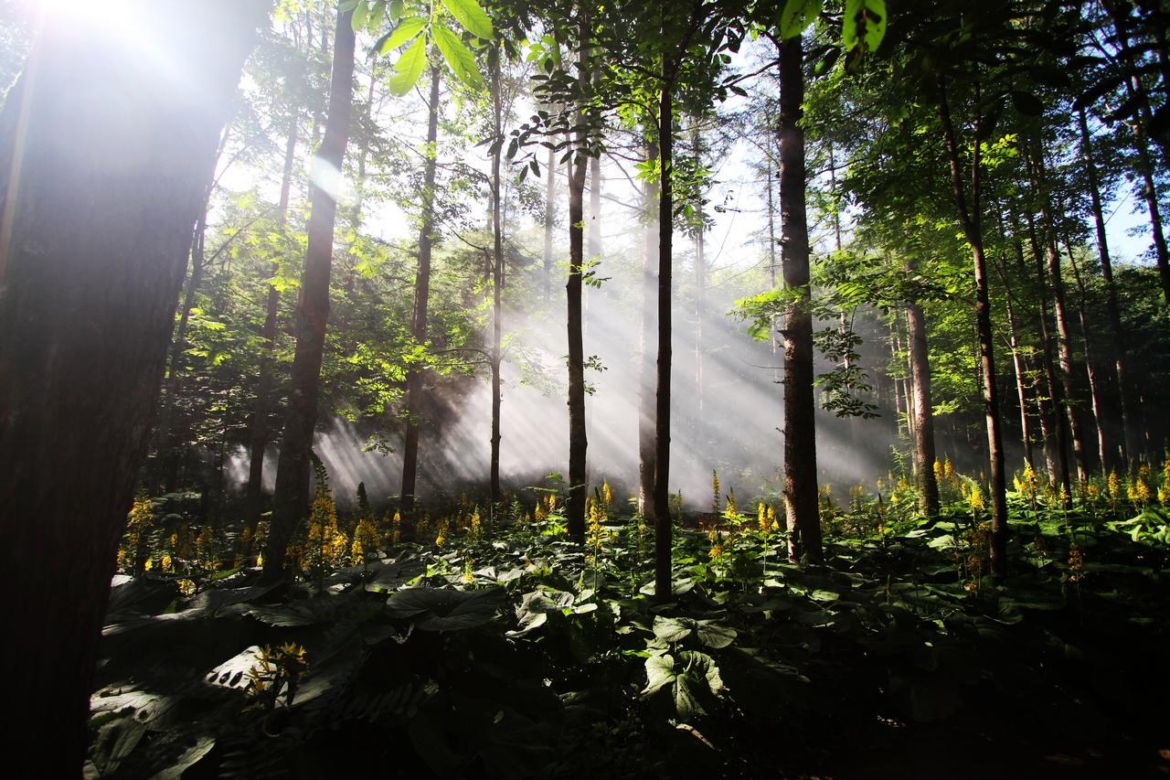 湖之秀】桐庐瑶琳仙境、森林氧吧、千岛湖中心湖区特价二日游