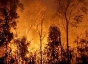 紹興發布森林禁火令,以下行為將追責!