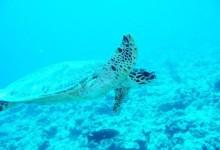 帕劳海底生物