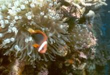 帕劳水底珊瑚泥