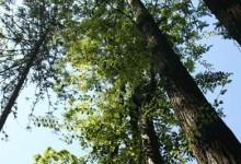 古田山国家自然保护区