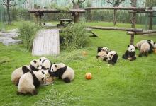 1-2月上海野生动物园、科技馆、长风海底世界亲子二日游