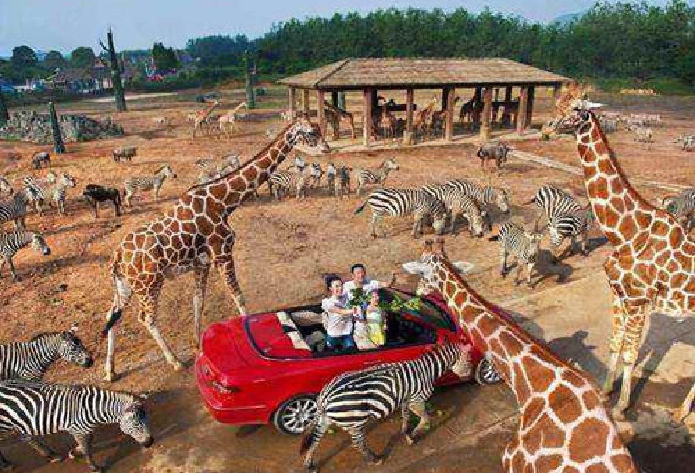 1-2月杭州野生动物园百兽狂欢亲子一日游