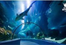 【梦幻魔都】上海野生动物园、科技馆、长风海洋世界亲子二日游
