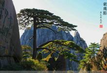 【山之灵】世界文化与自然双重遗产:大美黄山纯玩二日游