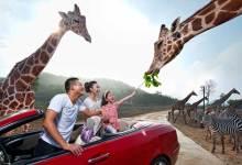 【12.7-22日】杭州野生动物园百兽狂欢亲子休闲一日