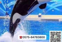 """【1月27、28日铁定发团418元】席卷你的想象—""""鲸动全城"""