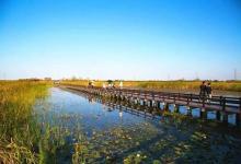 宁波杭州湾国家湿地公园、鸣鹤古镇特价一日游(含游船)