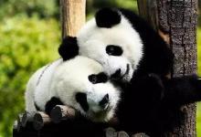 杭州野生动物园百兽狂欢、冰雪动物城亲子特价一日游(免费体验亲