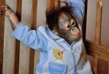 杭州野生动物园百兽狂欢亲子特价一日游