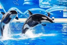 """【海洋""""鲸""""奇】上海海昌海洋公园一日游"""